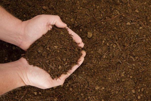 Amended Soil Blends