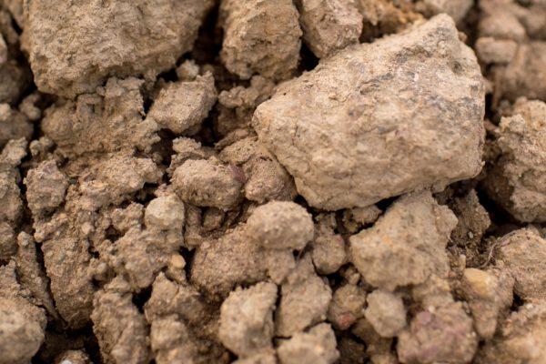 fill dirt2 scaled Fill Dirt