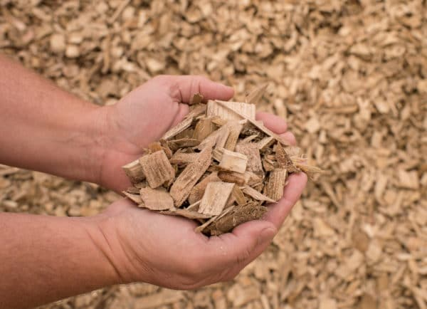 wood chips2 scaled Wood Chips