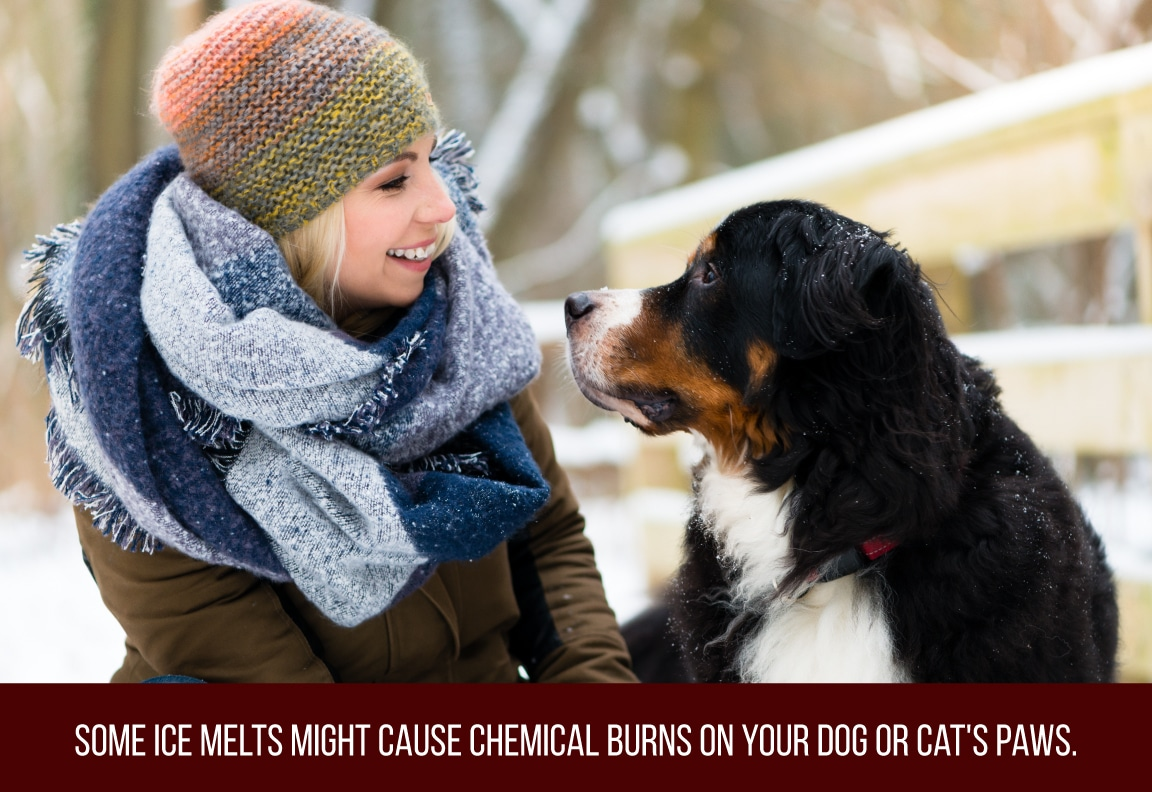 some ice melts might cause chemical burns on your pets paws