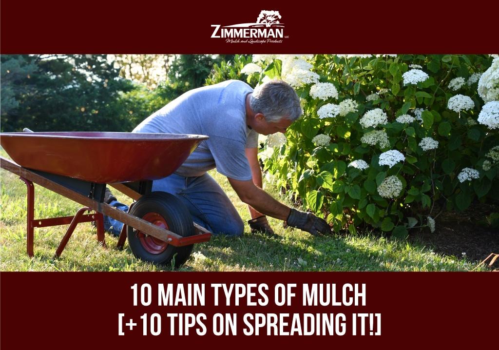 header 10 Main Types of Mulch [+10 tips on spreading it!]
